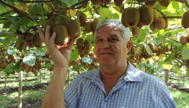 Introducing the Mega Kiwi with California Grower Jerry Kliewer