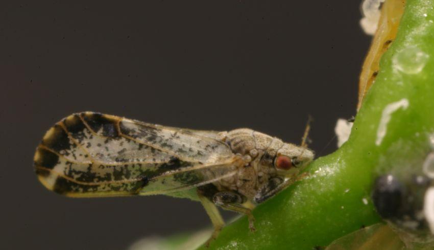 Pest awareness month